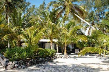 En pleine nature, entourés de palmiers, ils bénéficient d'une vue mer