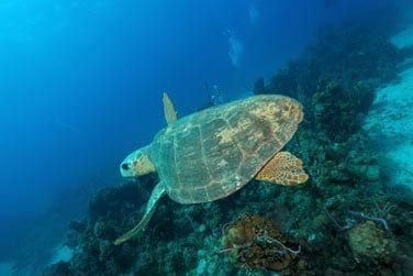 ... ou encore des tortues marines !