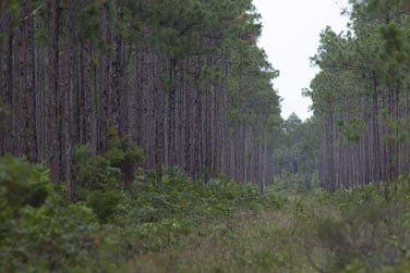 L'île offre de grands espaces et de vastes forêts de pins