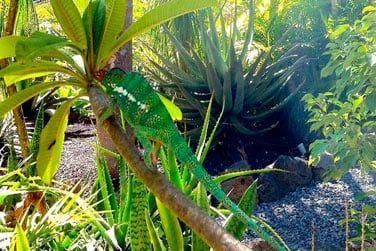 Un havre de paix en pleine nature tropicale
