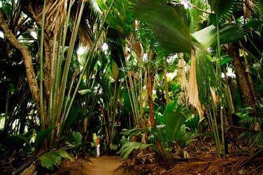 La végétation généreuse de la Vallée de Mai