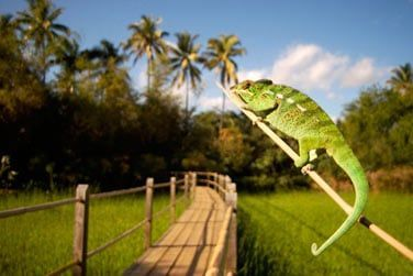 Sa faune et sa flore tropicale