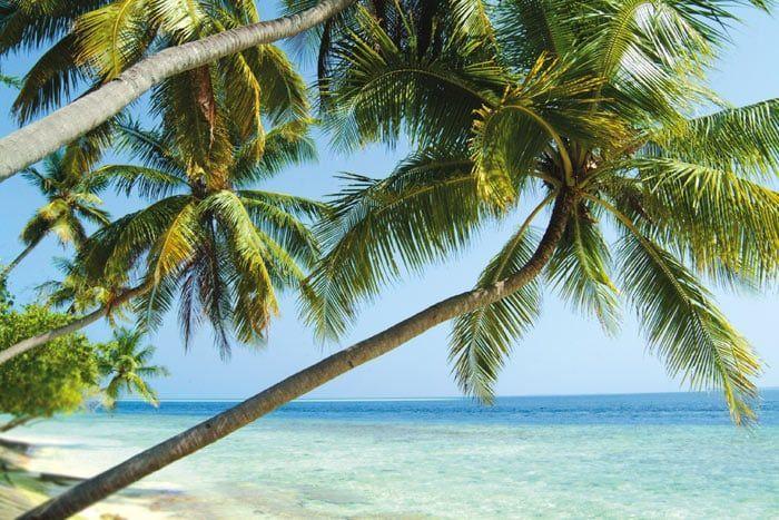 Hôtel Biyadhoo Island Resort 2*, Maldives