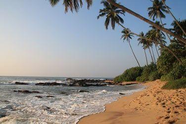 Des plages bordées de cocotiers...
