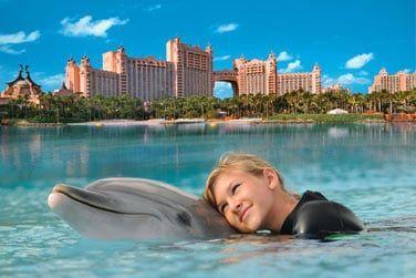 Pour ceux qui en ont toujours rêvé, vous pourrez approcher les dauphins