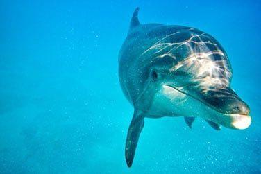 Vous pourrez côtoyer les dauphins de très près...