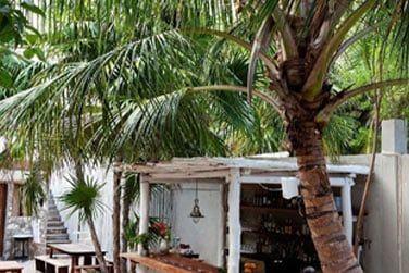 Laissez-vous guider par le barman pour un cocktail rafraîchissant aux saveurs tropicales