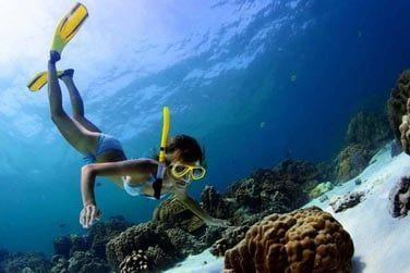Plongée bouteille ou snorkeling