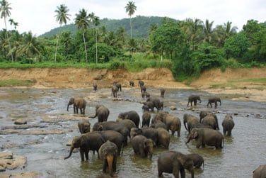 Observation des éléphants sauvages en liberté