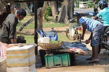 Ils venderont ensuite leur poisson frais au bord de la route