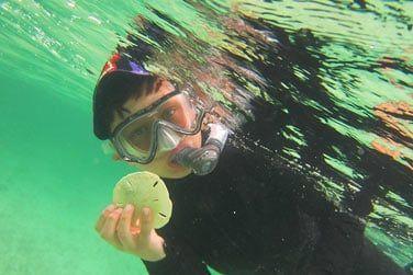 Parcourez les sublimes fonds marins lors d'une séance de plongée