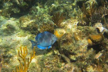 l'île d'Andros est reconnue pour avoir la 3e plus grande barrière de corail du monde !