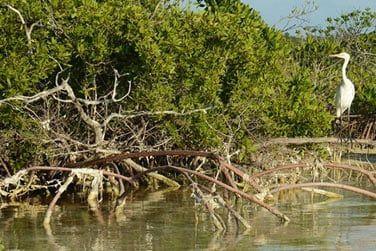 Explorez la faune et flore abondante de Mangrove Cay !