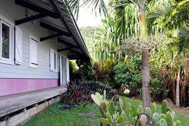 Au coeur de la végétatiojn tropicale luxuriante