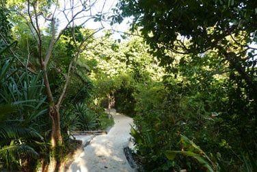 Promenez-vous au cœur de la végétation tropicale luxuriante de l'hôtel...