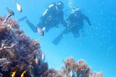 vous permet d'explorer la beauté sous-marine qui entoure l'île Pemba