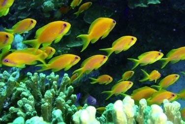 Découvrez une grande variété de faune et flore aquatique