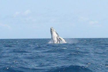 mais aussi d'apercevoir des baleines !