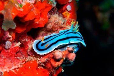Explorez la richesse de cette faune et flore sous-marine