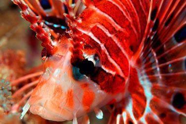 Sur le site vous trouverez le centre de plongée Dive Point Zanzibar