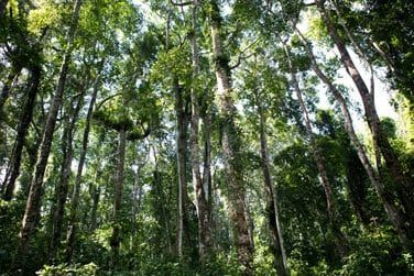 Explorez la magnifique nature environnante : randonnée dans la forêt de Ngezi et des plantations d'épices...