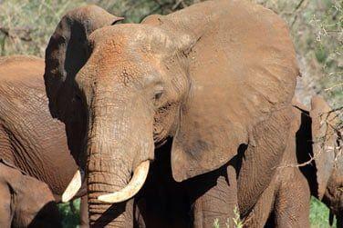 Tentez d'apercevoir les Big 5 : lions, éléphants, buffle, léopards et rhinocéros