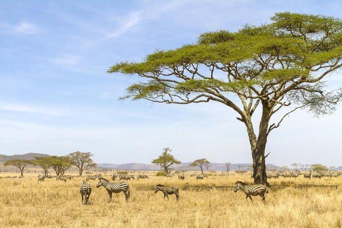 Circuit le meilleur de la Tanzanie - 6 nuits