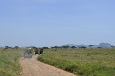 Le pays regorge de centaines d'espèces différentes de mammifères, oiseaux et reptiles... A vous de les trouver !