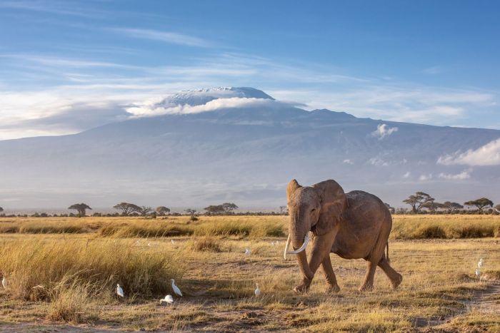 Combiné Tanzanie/Zanzibar - Brousse & Plage