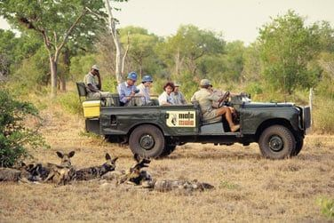 Observez la faune sauvage dans son habitat naturel