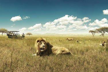 Entrez sur le territoire des lions