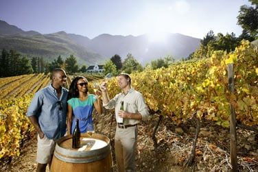 Le vin sud-africain est l'un des plus réputé dans le monde