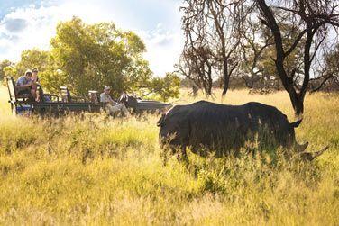 Révélez votre âme d'aventurier lors d'un safari !