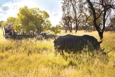 Hluhluwe est célèbre pour sa concentration de rhinocéros blancs