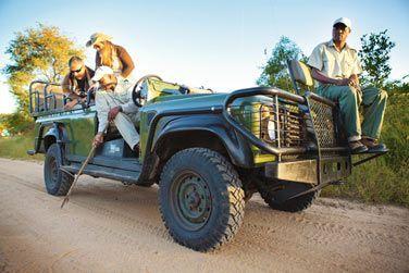 Découvrez la vie sauvage lors d'un safari dans le parc de Hluhluwe