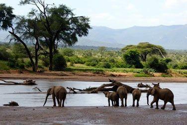 Observez les éléphants venir s'abreuver à la rivière