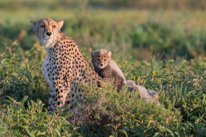 Zanzibar/Tanzanie du Sud - Détente & Réserve de Selous