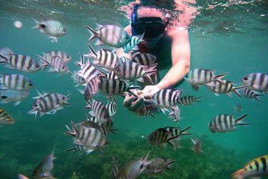 Explorez la beauté des fonds marins équipé de vos palmes, masque et tuba