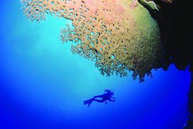 Initiez-vous à la plongée sous-marine