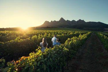 La découverte de la route des vins