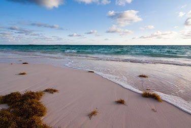 De sable rose...