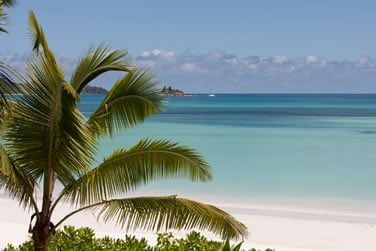 photo Acajou Seychelles