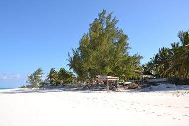 Au bord d'une immense plage de sable rose...