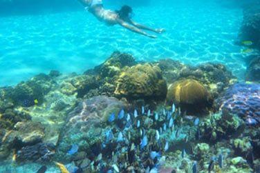 Explorez la beauté de biodiversité marine