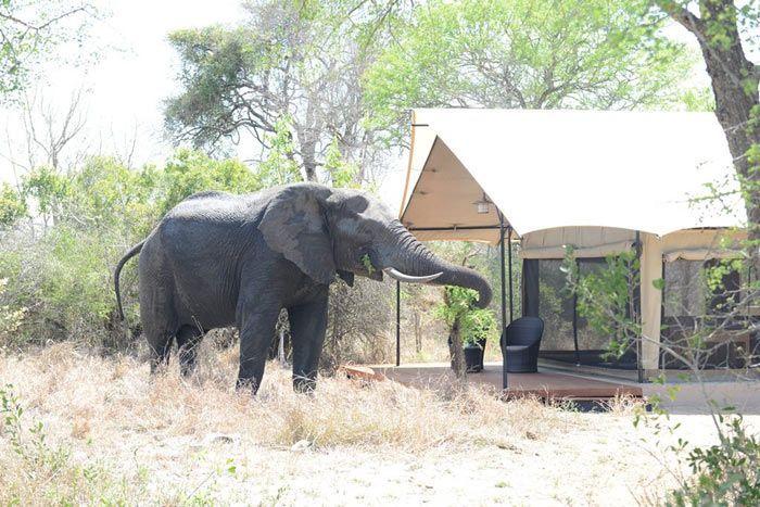 Hôtel Honeyguide Tented Safari Camps, Afrique du Sud