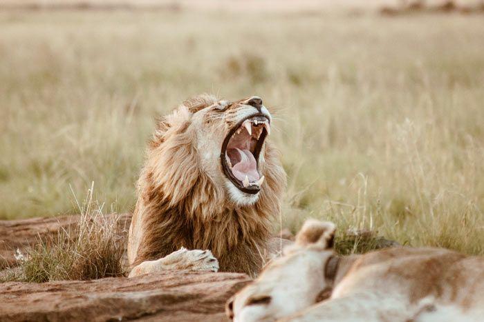 De la péninsule du cap au Parc Kruger, Afrique du Sud