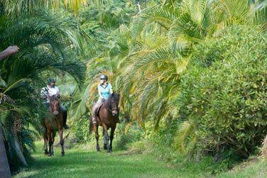 En pleine nature, explorez les environs à pied ou à cheval, une écurie est présente sur le domaine !