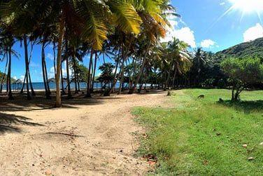 Profitez du climat généreux à l'ombre des palmiers...