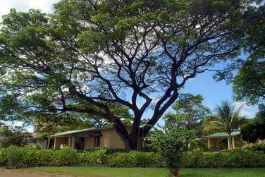 Les bungalows parsemés dans le jardin luxuriant de l'hôtel..