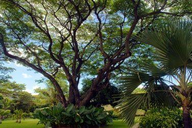 Le jardin tropical luxuriant